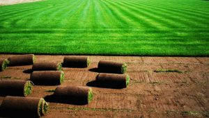 The Specialties of Turf and The Areas of Usage